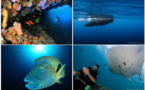 "Ultramarina lance un tour du monde ""globe plongeurs"" de 46 jours"
