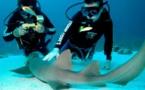 Les Bahamas seront au Salon de la Plongée