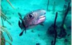 Plongée : les fonds marins de l'île de la Dominique à nouveau exploitables