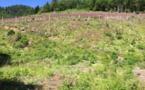 Compensation carbone : les agences Nouveaux Espaces plantent 6000 arbres