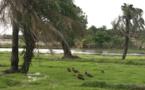 Sénégal : la situation reste à clarifier sur le contrôle du vaccin de la fièvre jaune (mise à jour)