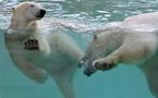 Antibes : Marineland inaugure son espace de vie pour les ours polaires