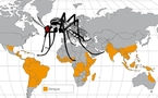 FAQ the dengue : que dire à vos clients à propos du virus ?