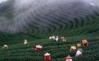 Taïwan détrônée par l'exposition universelle de Shanghai