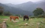 Pays Basque : Sare, un patrimoine remarquable et des coutumes ancestrales
