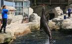 Nausicaa : les îles s'ancrent pour 3 ans à Boulogne-sur-Mer