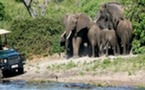 Safari Botswana 10 jours individuel 2011 vol régulier au départ de france et de Belgique