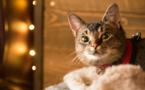 Emploi : un chat embauché dans un hôtel en Islande