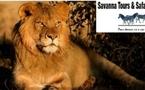 Savanna Tours & Safaris, réceptif en Tanzanie avec un bureau à Arusha, à Dar Es Salam et à Zanzibar.