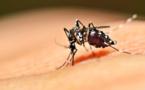 République Dominicaine : recrudescence des cas de dengue