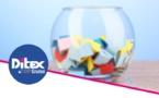 Grand tirage au sort DITEX : gagnez des séjours, croisières, nuits d'hôtels....