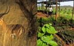 """Tanzanie : Voyamar lance un produit """"ecofriendly"""""""