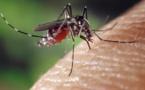 Thaïlande : recrudescence des cas de dengue