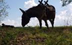 """Val de Loire : """"L'heureux Hasard"""", des cabanes, des ânes et des roulottes..."""