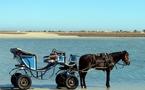 """Tunisie : les hôteliers veulent faire de l'île de Djerba une """"Zone Franche"""""""
