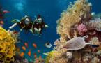 Comment Subocea aide à organiser des sorties de plongée sous-marine