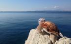 """Antibes : la tortue caouanne, """"star"""" de l'hôtel du Cap-Eden-Roc"""