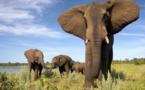 Le Zimbabwe part à la reconquête du marché touristique français