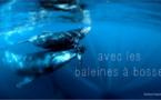 Ile de La Réunion Tourisme : les baleines à bosse, quel spectacle !