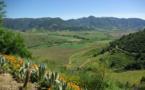 III. - Chili : Séjours chics dans les vignes du Nouveau Monde