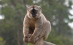 Pays & Marchés du Monde à Madagascar :  la grande-ile et ses trésors naturels
