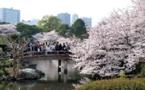 Japon : les TO bourgeonnent et les cerisiers du tourisme refleurissent