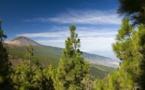 """Canaries : Tenerife veut reprendre """"la place touristique qu'elle mérite"""""""