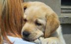 Vacances d'été : que faire des animaux domestiques de vos clients ?