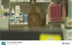 Australie : l'aéroport de Melbourne bloqué à cause d'un... kangourou !