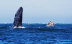 Réveillons insolites : un Nouvel An avec les baleines grises au Mexique