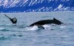 """""""Pays & Marchés du Monde"""" : Islande, l'île de glace tout feu tout flamme..."""