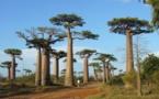 Instabilité, manque d'infrastructures... Madagascar peine sur le marché français