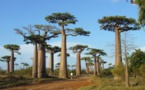 Instability, lack of infrastructures… Madagascar is struggling on the French market