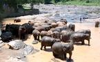 CETO : le Sri Lanka de nouveau dans les « petits papiers » des TO ?