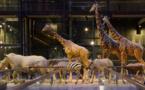 Le Muséum d'Histoire naturelle a accueilli près de 4 millions de visiteurs en 2014