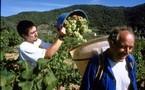 Ociléo Vacances se spécialise dans la location de gîtes-vigneron