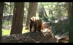 Jour 5 - Fam Visit California, découvrez Sequoïa National Park
