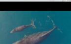 Les îles Vanille en lutte contre le réchauffement climatique