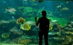 Boulogne-sur-Mer (Pas-de-Calais) : le Centre national de la Mer Nausicaa fête ses 25 ans