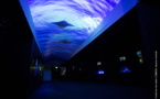"""Pour éclairer les abysses, Aquarium La Rochelle ouvre une """"Galerie des Lumières"""""""