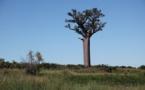 Tourisme : Madagascar a une chance historique à saisir