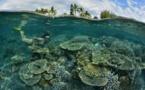 La Réunion : la plongée, une activité accessible à tous dès 8 ans