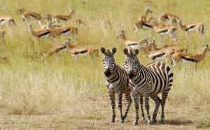 Le Kenya à la conquête des pros du tourisme français