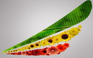 Ethiopian Airlines fait décoller ses bénéfices et se sent pousser des ailes