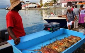 I - Antilles  : la relance, les pros y croient, question de survie !