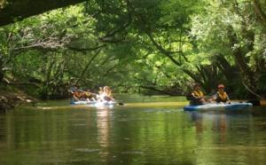 Descente de la Leyre en canoë, sous la voûte forestière landaise