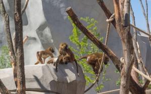 Le zoo de Vincennes évacué et fermé...