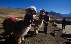 Pérou : +3.3% de visiteurs français en 2009