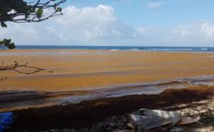 Antilles : 10 millions d'euros pour lutter contre les sargasses sur le littoral