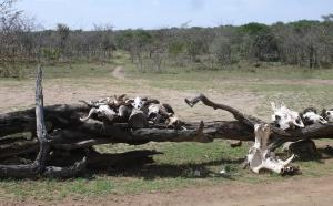 Serengeti : la Tanzanie veut se mettre des « bâtons dans les gnous »...